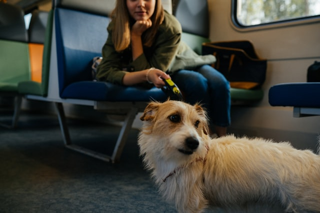 traveling with dog